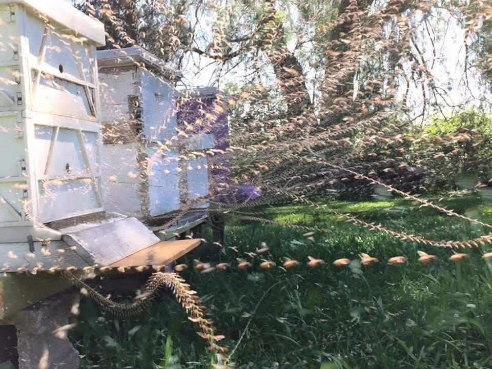 bees flight path