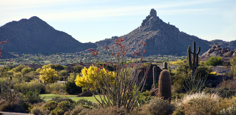 Pinnacle+Peak+Ocotillo