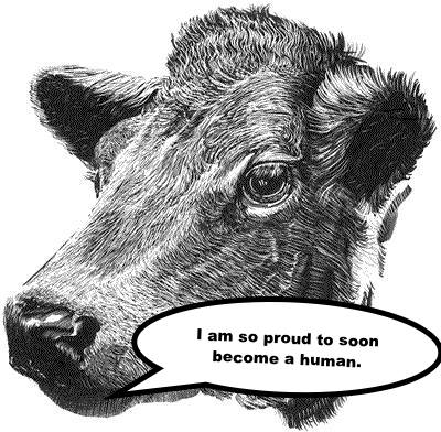 COW TO HUMAN